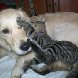 Opiekun zwierząt Marzena  Bytom