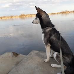 Opiekun zwierząt Justyna B. Tczew