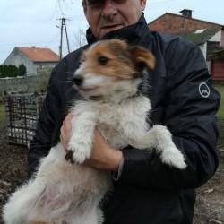 Opiekun zwierząt Wojciech Z. Poznań