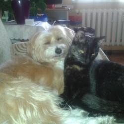 Opiekun zwierząt Beata P. Poznań